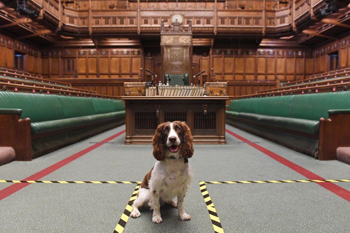 הפרלמנט הבריטי - הסכם סחר